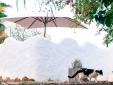 Casa da Alfarroba - Cochichos Farm Selbstverpflegung Landhäuser - Olhao Faro Algarve