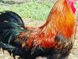 Draußen Cochichos Farm Olhao Faro Algarve Hotel Apartments zur Selbstverpflegung