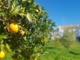 Draußen - typische Häuser - Cochichos Farm Olhao Faro Algarve Hotel Apartments zur Selbstverpflegung