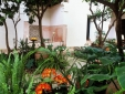 Riyad El Cadi Marrakesh boutique - Courtyard garden
